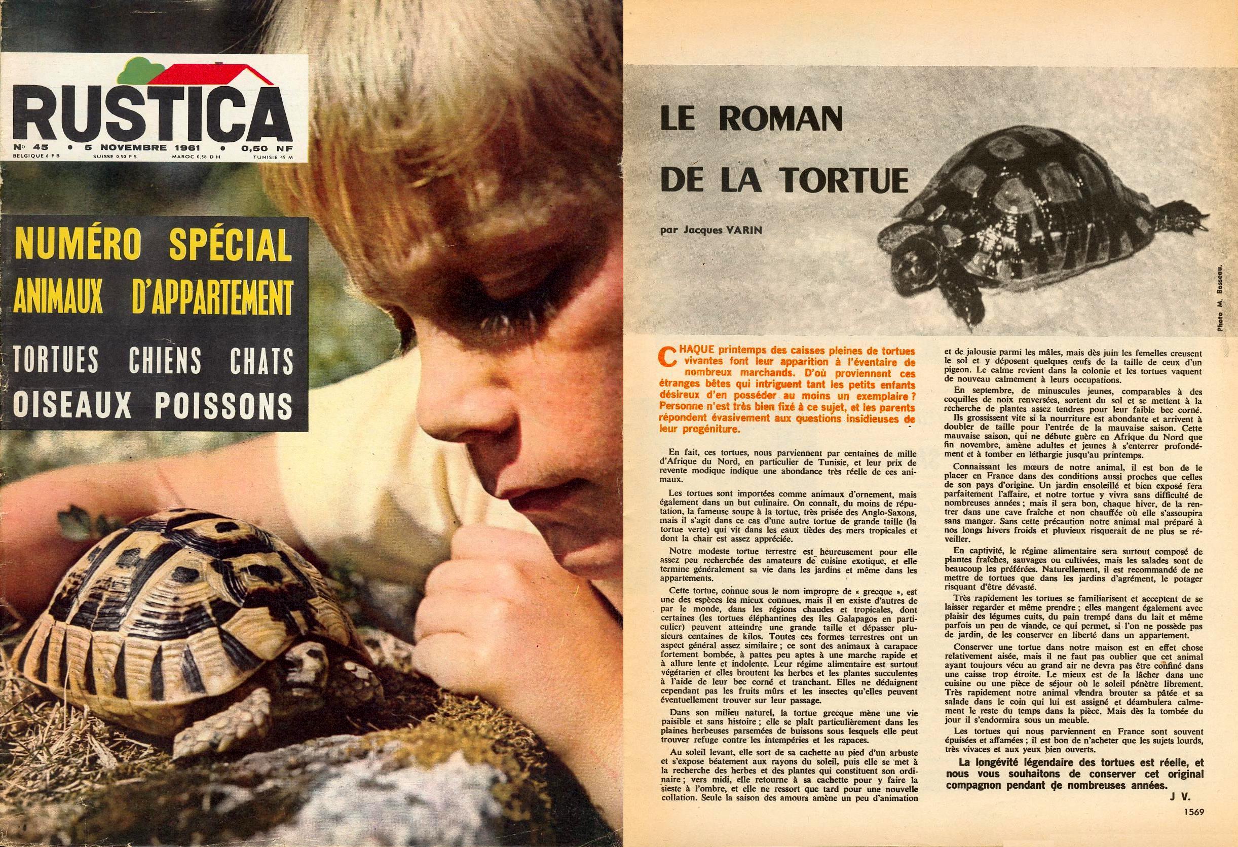Img45155 Frais De Aquarium tortue Aquatique Schème